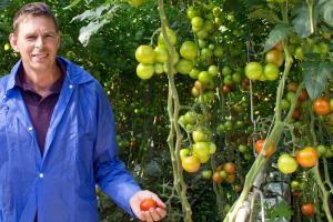 Onze tomatenleverancier